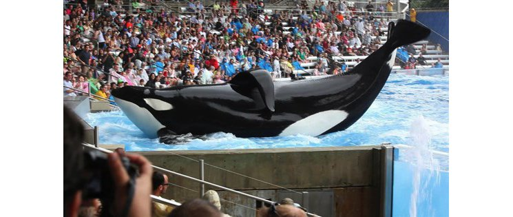 Controversial Documentary about Killer Wales at SeaWorld